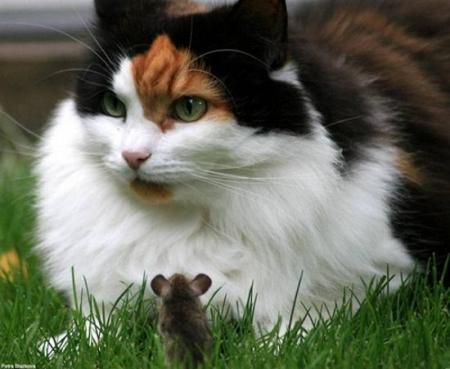 Шикарний кіт (голодний) (2 фото)