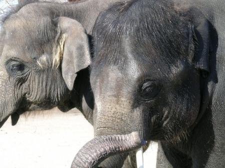 Як народжуються слони, собаки, дельфіни (23 фото!)