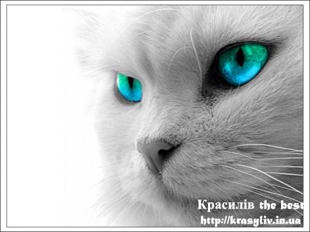 Коти, котики, котяри - чудні тварини (25 фото)