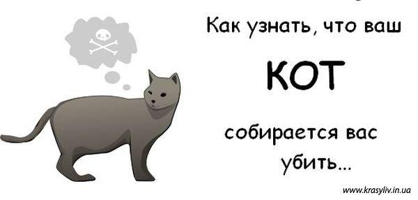 Коти-кіллери (Cat Killers) - 10 фото