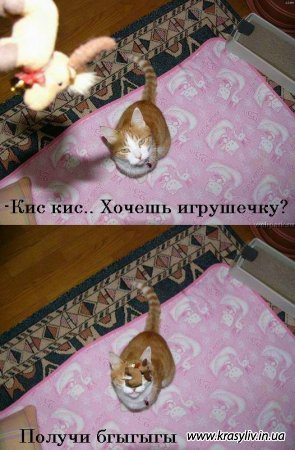 Коти, що говорять