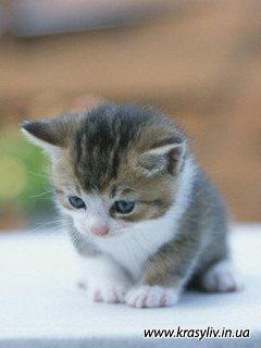Котенята