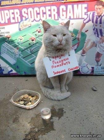 Голодаю!