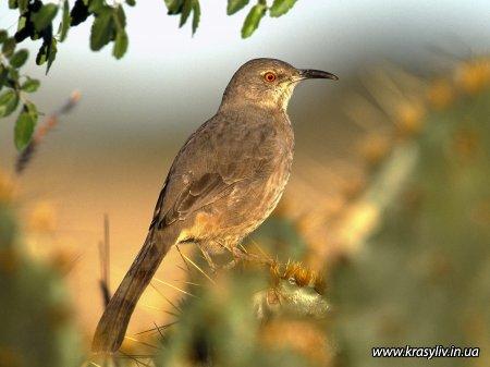 Птахи (шпалери)