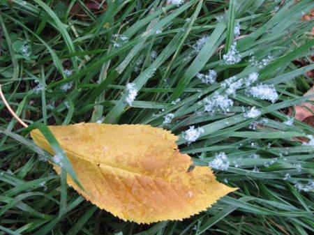 Перший сніг - 2010